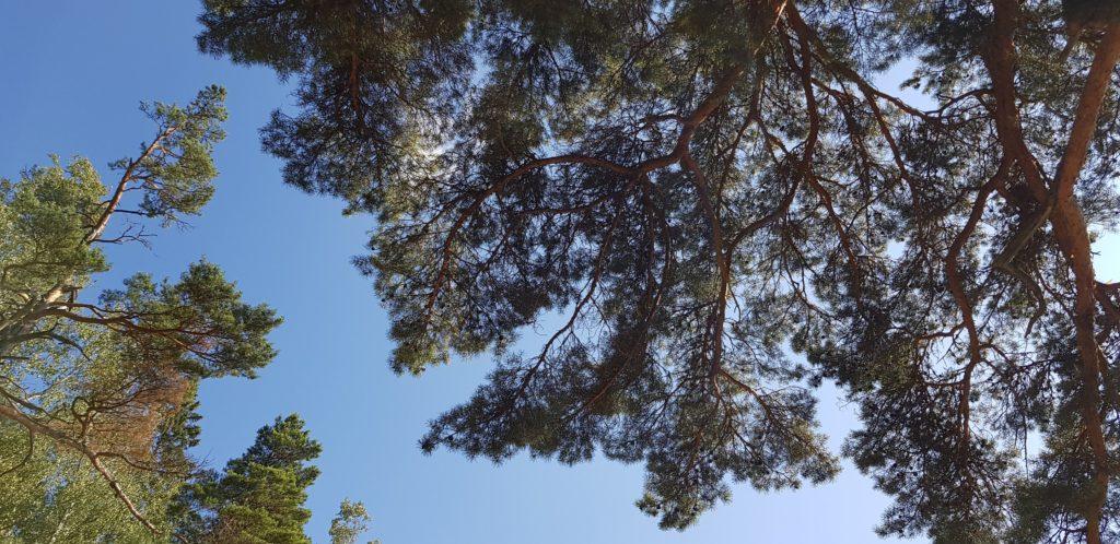 Sweden summer by Ingemar Pongratz