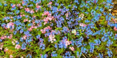 Flowers av Ingemar Pongratz